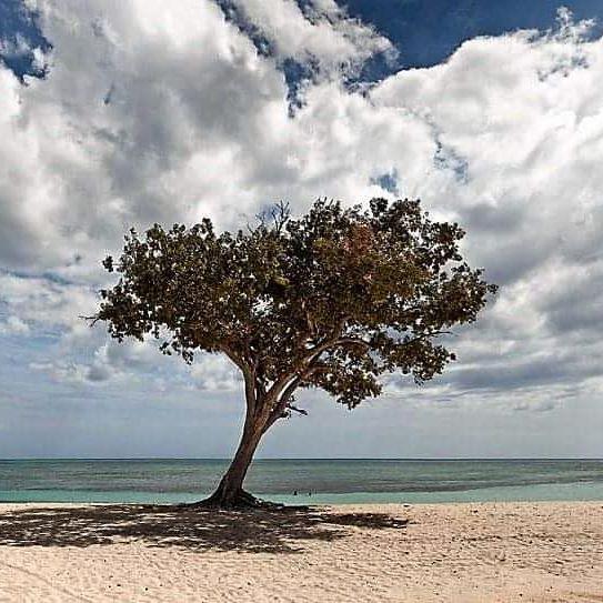 mejores-fotografos-españoles-josé-maría-mellado